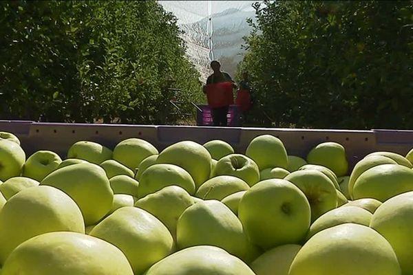 La pomme des Hautes-Alpes est en mal de reconnaissance face à la concurrence.