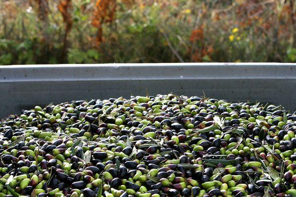 Le salon Sitevie met à l'honneur la viticulture et l'oléiculture.