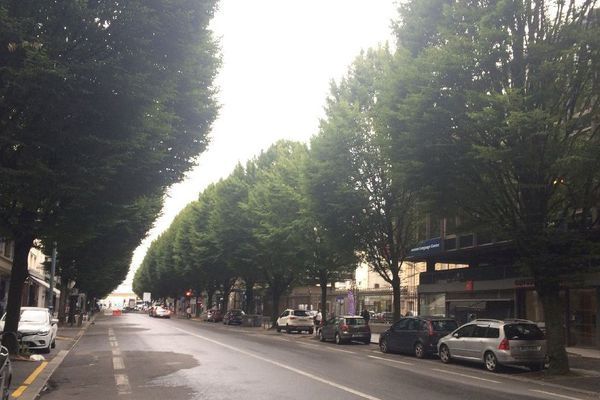 L'enfilade des charmes de l'avenue Jean Janvier, à Rennes
