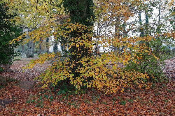 Arbres d'automne à Pleslin