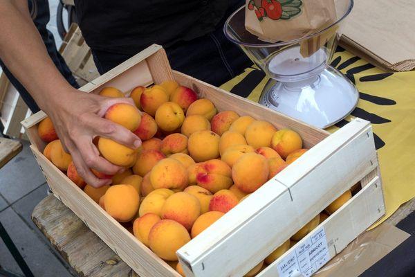 """Nouvelle crise pour les producteurs de fruits des Pyrénées-Orientales à cause de la concurrence espagnole:  """"Avec un kilo d'abricots, vous n'avez pas assez pour acheter une baguette!"""" affirme un producteur d'abricots à Salses-le-Château."""