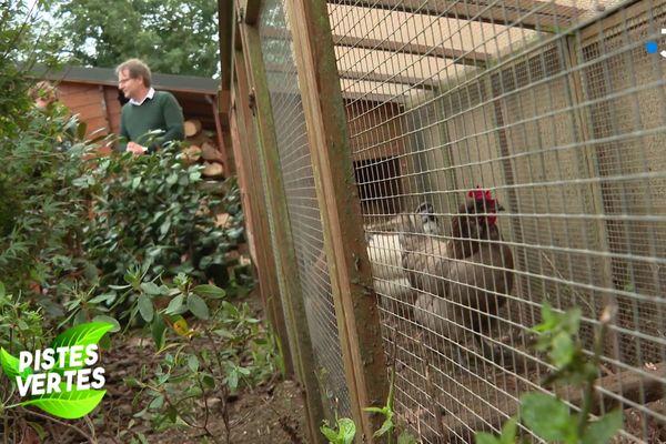 Les poules dans le jardin permettent de limiter considérablement les déchets alimentaires.