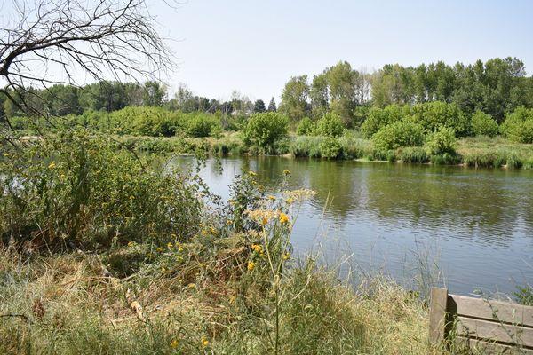La réserve naturelle de Mareau-aux-Prés vit au rythme de la Loire