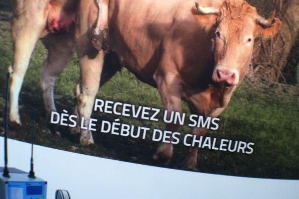 Des agriculteurs avertis des chaleurs par SMS