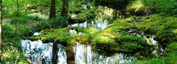 Le parc national compte une centaine de marais tufeux qui se caractérisent par la présence de sources pétrifiantes engendrant des concrétions calcaires. Ce sont des milieux très fragiles et près d'une cinquantaine d'entre eux sont  inventoriés au sein du réseau Natura 2000.