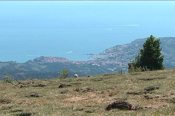 Le sentier de grande randonnée GR10 relie Hendaye et le pays basque à Banyuls dans les Pyrénées-Orientales. Entre temps, il fait escale par la réserve naturelle de la Massane dans le massif des Albères.
