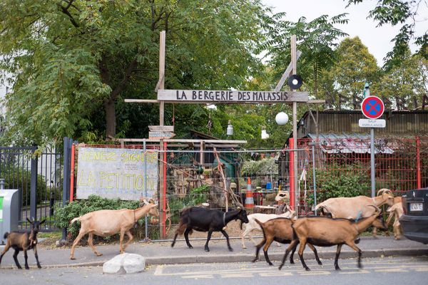 La Bergerie des Malassis à Bagnolet participe au festival Jardins Ouverts