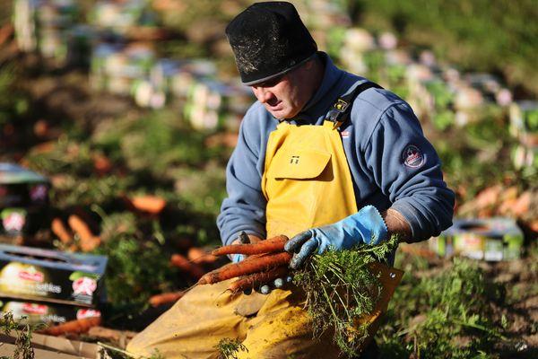 Le procès des 14 producteurs de carottes de Créances s'est ouvert dans la Manche mercredi 19 mai 2021.