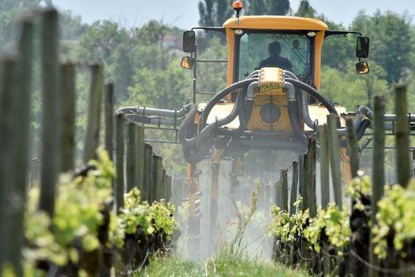 Les pesticides utilisés massivement dans les vignes changent le goût du vin d'après le scientifique G.E Séralini