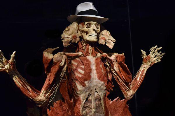 Derrière les squelettes, les dissections et les vieilles pierres, des noms devenus célèbres dans l'histoire