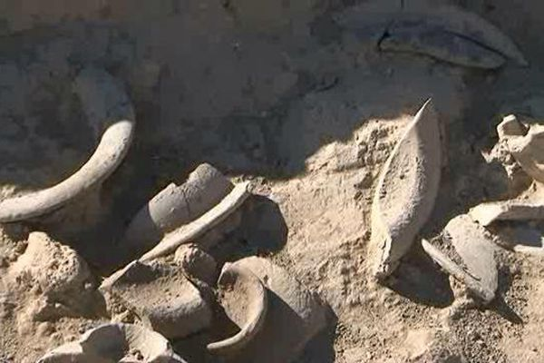 Des restes de céramiques retrouvés dans le bûcher funéraire