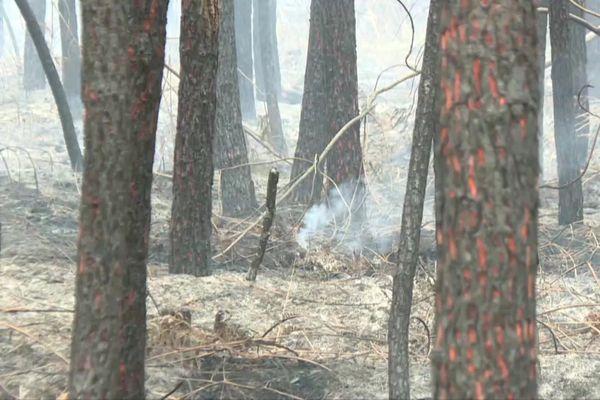 L'incendie a ravagé près de 120 hectares de végétation à une vingtaine de kilomètres au nord est de Bordeaux