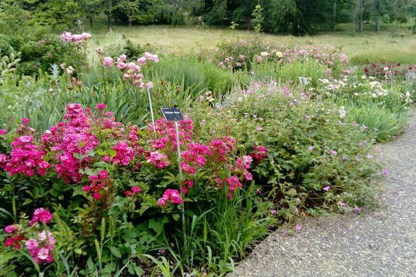 Le Jardin botanique du Grand Nancy et de l'Université de Lorraine, en ce mois de juin 2020