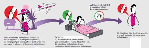 La dengue peut être transmise par les moustiques après un séjour dans un pays étranger.