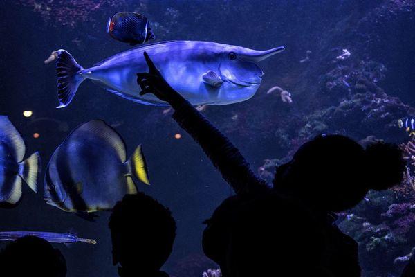 L'eau des poissons de l'aquarium de Paris sert à arroser un jardin suspendu (illustration).