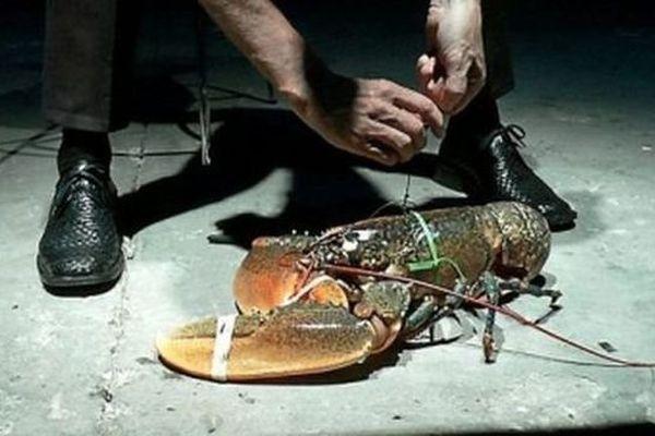 Le homard découpé vivant dans la pièce Acciden