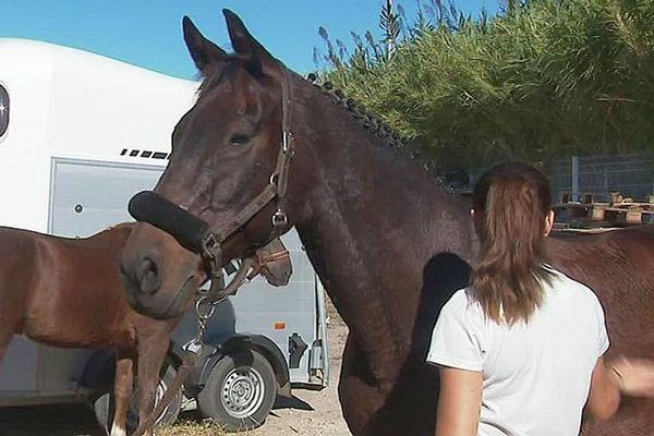 Montpellier - un cheval et sa jeune cavalière avant le concours au jumping international Occitanie - octobre 2018.