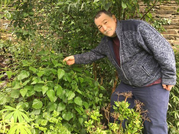 L'avantage de l'ortie c'est qu'elle pousse pratiquement partout, autour des maisons, en lisière de jardins ou de champs