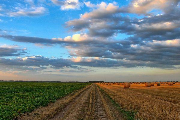 Les dons agricoles font le lien entre les bénéficiaires d'associations d'aide alimentaire et les agriculteurs
