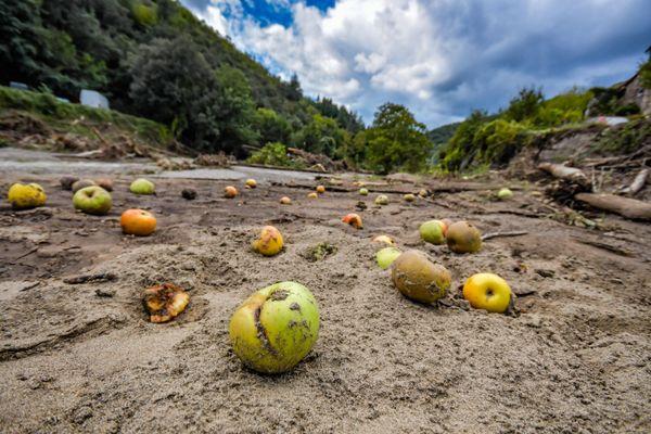 Mandagout - Un verger de pommiers entièrement détruit par les eaux - 23.09.20