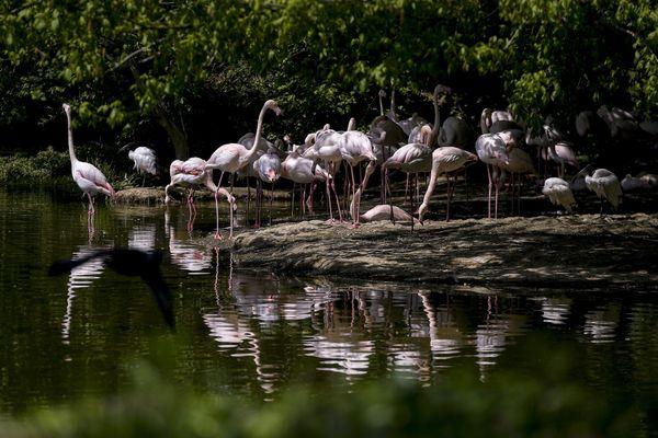 Grégory Doucet a dissipé ce lundi 5 juillet, les inquiétudes qui pouvaient peser sur l'avenir du parc zoologique municipal de la Tête d'Or, en réaffirmant sa vocation de refuge pour la biodiversité.