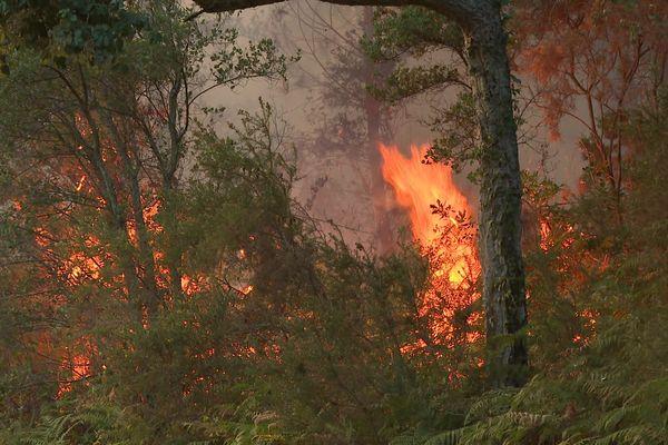 Les flammes se sont propagées très rapidement attisées par un vent soutenu