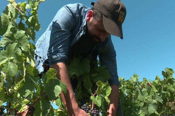 le Domaine Louis Claude Desvignes, à Villié-Morgon, dans le Beaujolais, décroche 3 étoiles au guide vert 2020 des meilleurs vins de France