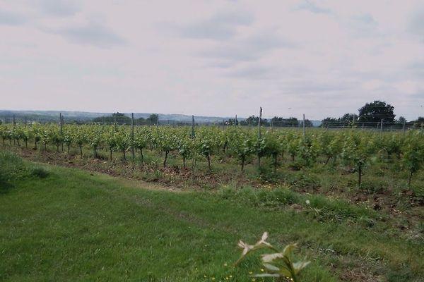 Des vignobles sans visiteurs depuis deux mois
