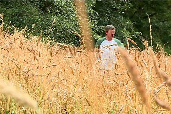 Jean-Christophe Bady dans ses champs de blé