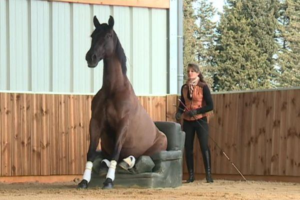 1200 chevaux assurent le show pendant 5 jours à Cheval Passion.