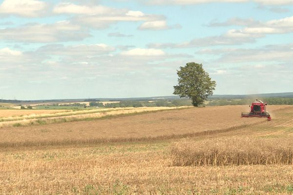 Les moissons ont débuté en Bourgogne, on s'attend à des rendements moyens compte-tenu de l'hiver pluvieux et de la sécheresse du printemps