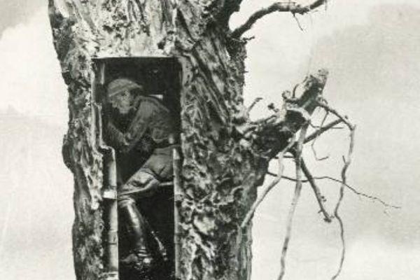 Un arbre de camouflage