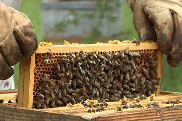 Les abeilles se portent mal.