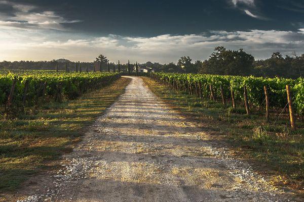 2ème producteur mondial de vin, la France a connu son plus faible volume en 2017.