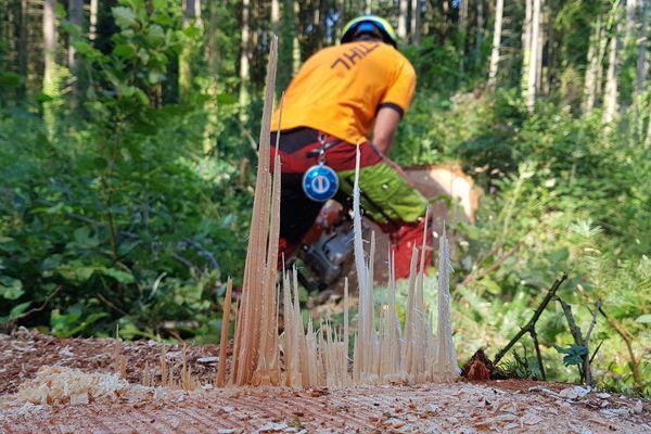 J'ai testé pour vous le métier de bûcheron dans la région thiernoise, dans le Puy-de-Dôme. Et nous sommes bien loin des stéréotypes du bûcheron canadien.