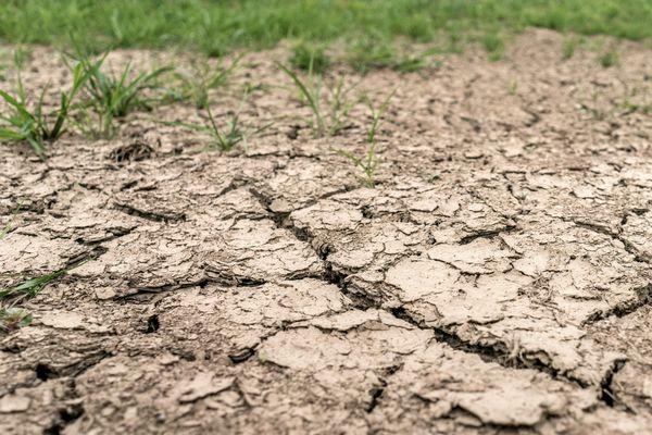 La sécheresse continue de frapper durement la Bourgogne.