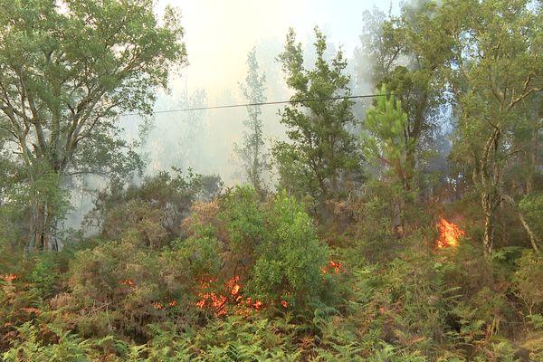 Un feu de pins en Nouvelle-Aquitaine