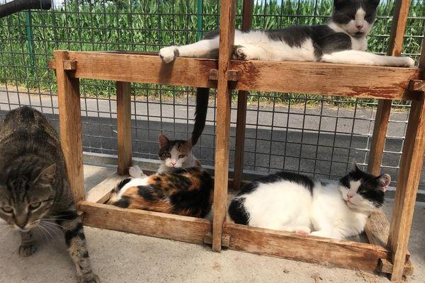Plus de 150 chats se trouvent déjà au refuge APA de Gerzat, près de Clermont-Ferrand, mais des abandons ont lieu chaque jour.