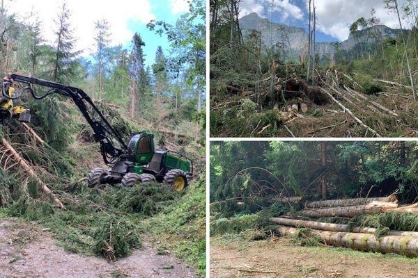 Les intempéries du lundi 1er juillet ont touché des centaines d'hectares de forêts en Haute-Savoie.