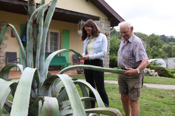 Claire et Etienne Schmitt inspectent les feuilles de l'agave américain. Elles ont tendance à se dessécher depuis que la hampe florale est apparue.