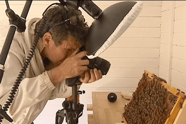 Eric Tourneret photographe des abeilles en séance de travail