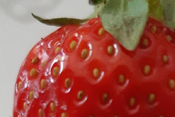 Fraise de Carpentras : le fruit doit être parfait.