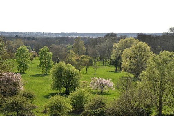 Vue de l'arboretum de Versailles-Chèvreloup