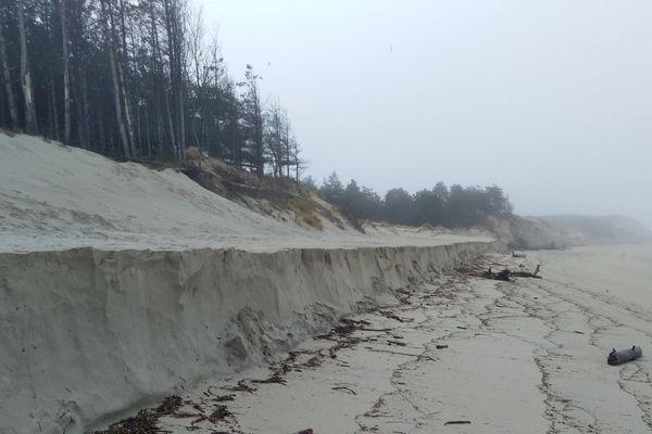 De nouveaux projets pour protéger le bois de Sapins en Baie d'Authie