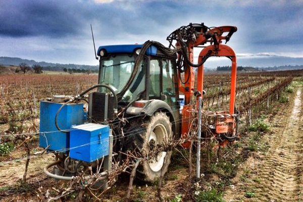 Dans l'Aude, c'est la saison de la taille pour les vignerons, de nombreux vignerons ne sont pas équipés pour tailler leur vigne mécaniquement- 19 décembre 2016