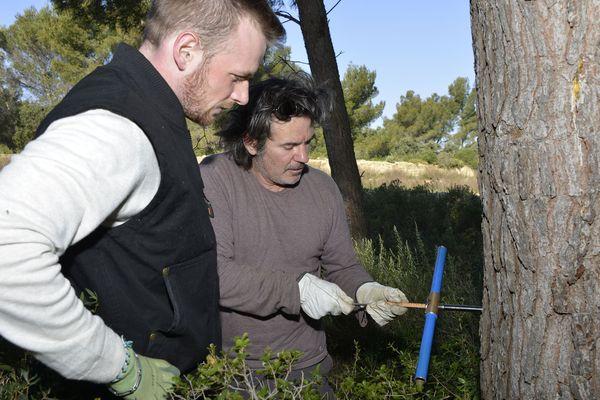 Le carottage se pratique à 1m70 du sol sur 1 cm de diamètre de chaque coté du tronc de l'arbre.