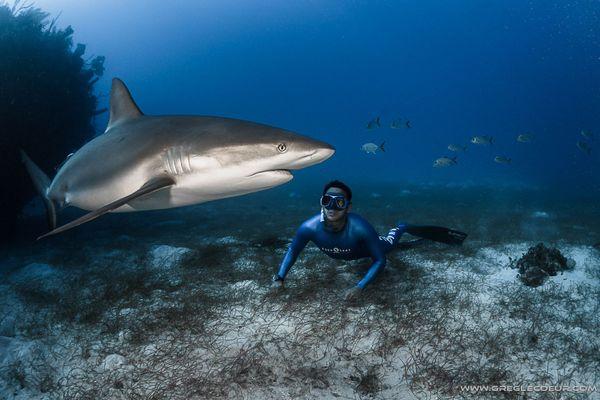 Pierre Frolla, et un requin.