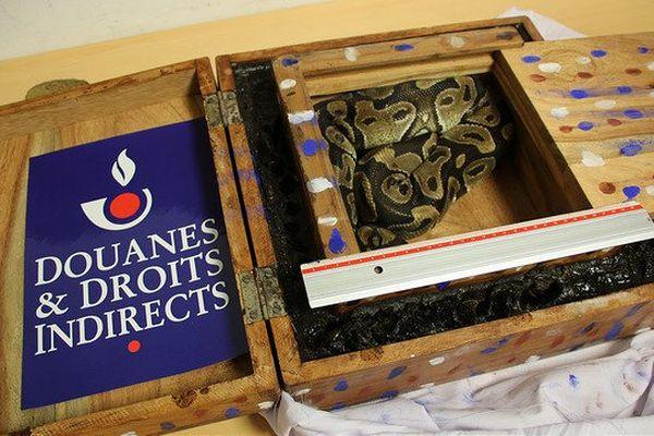 Un python saisi par la Douane française, à Roissy.