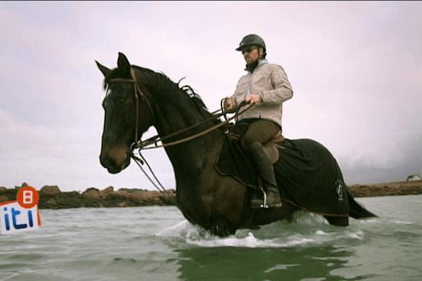 Les chevaux aussi aiment les bains de mer
