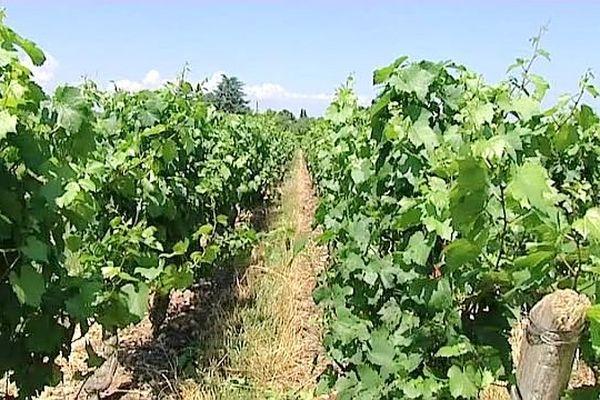 Soulagement des viticulteurs bourguignons : on ne pourra pas planter de la vigne sans aucune règle.